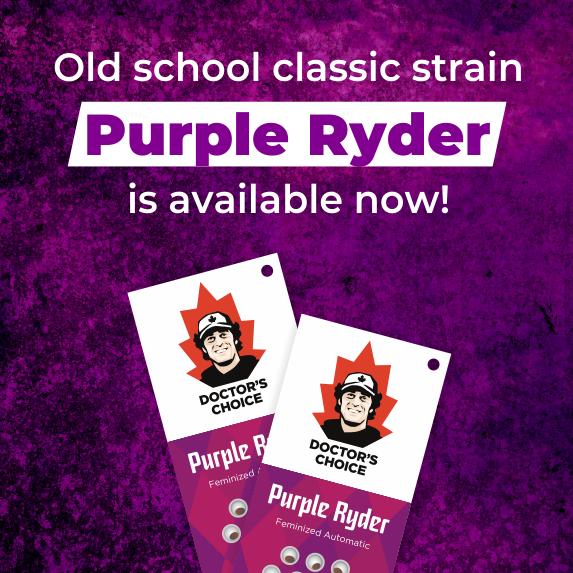Purple Buds – Mind in Clouds!